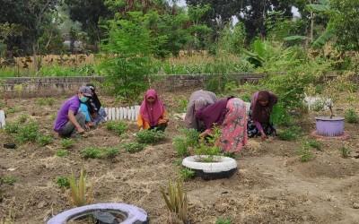 Tim Aku Sehat Gayam Edukasi Warga Desa Menanam Tanaman Toga