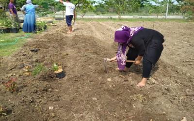 Pembuatan Taman Hijau Di Desa Gayam Oleh TIM AKU SEHAT Kampus Ungu