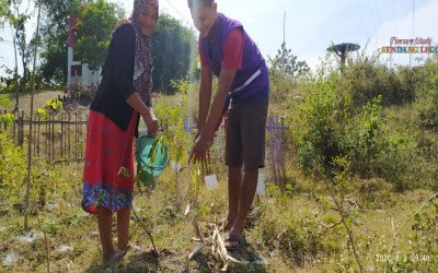 Tim Aku Sehat Bersama Warga Desa Mojodelik Kecamatan Gayam Rawat Tanaman Obat